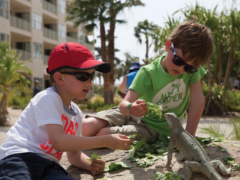 Marriott's Aruba Surf Club<span class='trademark'>®</span> Activities -