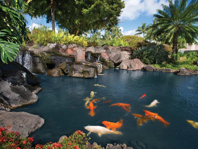 Marriott's Kaua'i Beach Club Koi Pond. Marriott's Kaua'i Beach Club is located in Līhuʻe, Kaua'i, Hawai'i United States.