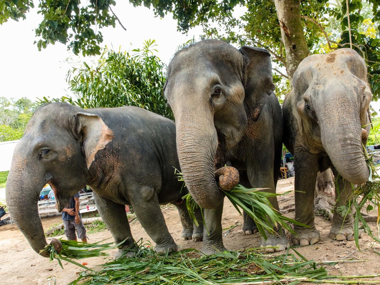 Marriott's Mai Khao Beach — Phuket Destination Excursion/Elephant Jungle Sanctuary. Marriott's Mai Khao Beach — Phuket is located in Mai Khao, Talang, Phuket Thailand.