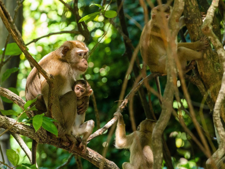 Marriott's Mai Khao Beach — Phuket Destination Excursion/Monkey Hill. Marriott's Mai Khao Beach — Phuket is located in Mai Khao, Talang, Phuket Thailand.