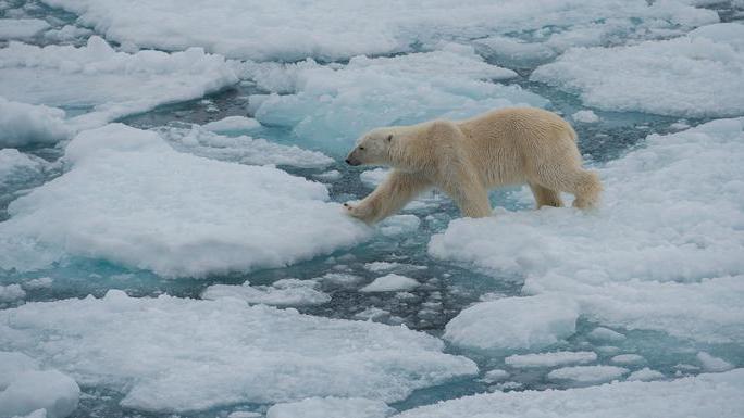 Realm of the Polar Bear 8-day